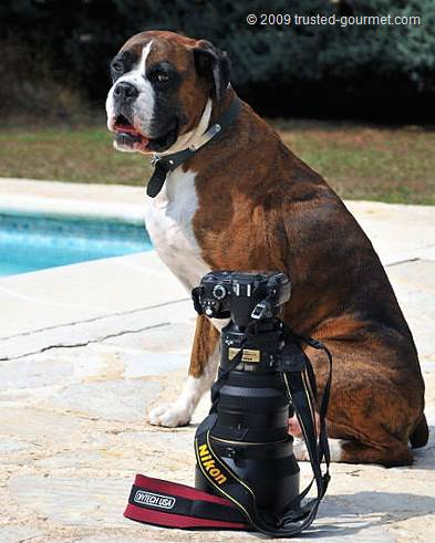 Nikon D700 with the Nikkor 200f2. Top model posing is Henri.