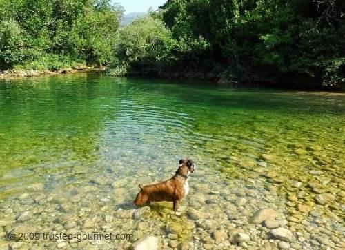 Henri in the Siagne river