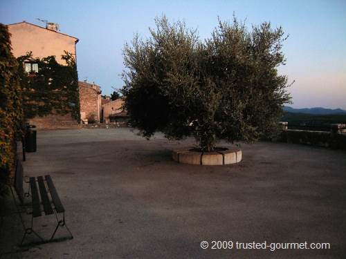 Nice olive tree. The village is famous for its excellent olive oil.